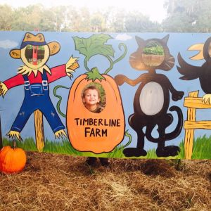 Belleview: Timberline Farm Pumpkin Patch and Corn Maze Festival