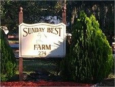 Sunday Best Farm