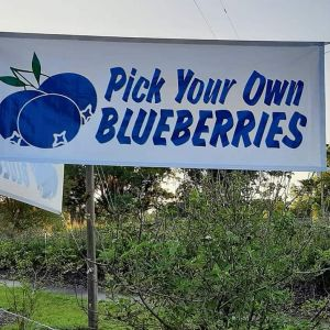 Deland Blueberries